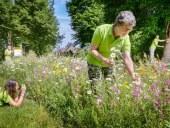 project 'Bijen, bermen en bestuivers' van IVN Westerveld